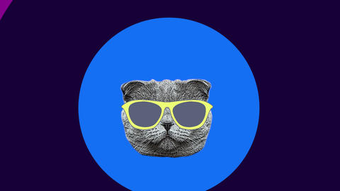 sunglasses fashion cool cat minimal motion art Animation