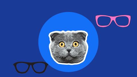 sunglasses fashion cool cat eyewear art background Animation