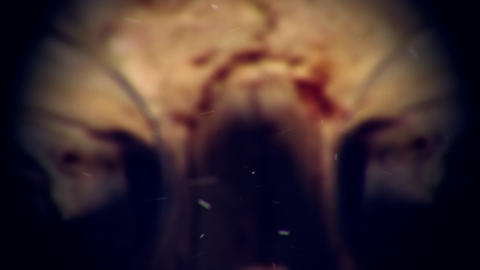 Human Skull Zoom Out Horror Atmosphere Live Action