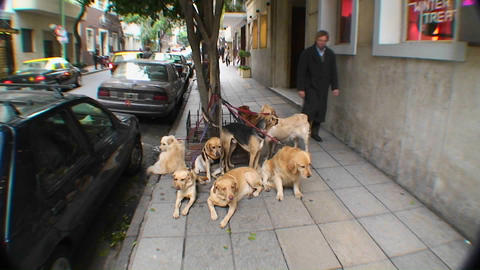 Pets are tied up on leashes on street in Buenos Aires Stock Video Footage