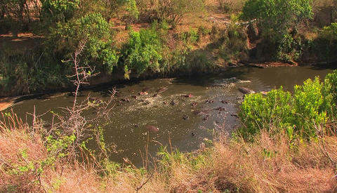 A large group of hippopotamuses wallow in a river Stock Video Footage