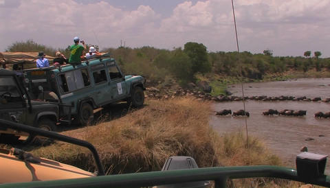 Tourists watch as a herd of wildebeest cross a river Stock Video Footage