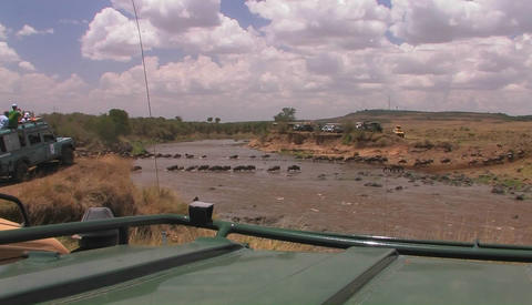 People on safari watch wildebeest cross a river Stock Video Footage
