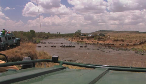 People on safari watch wildebeest cross a river Footage