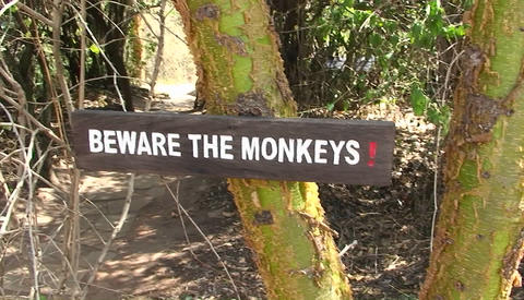 A solar water heater stands outside, and a sign instructs people to beware of monkeys Footage