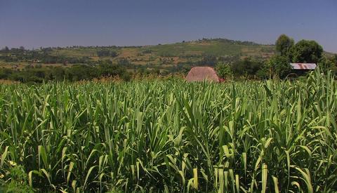 Tall wild-grass grows in an open field Stock Video Footage