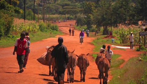 People and donkeys walk up and down a country road Stock Video Footage