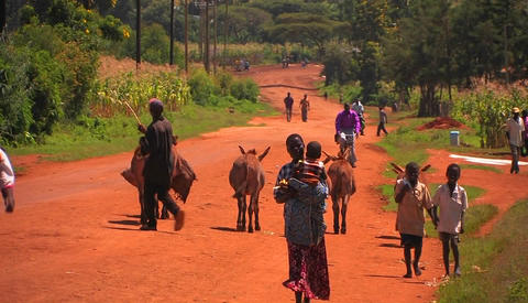 People and donkeys walk up and down a country road Footage