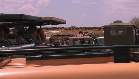 People in vehicles observe a herd of animals on the plains Footage