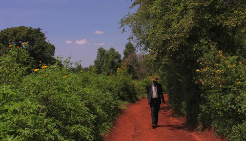 A man carrying a stick walks through a grove of trees and bushes, some with orange flowers Footage