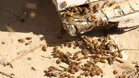 Bees swarm around the corner of a piece of wood Stock Video Footage
