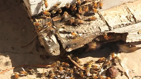 A bee hive with bees coming and going Stock Video Footage