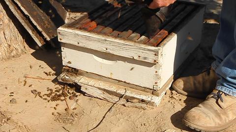 Beekeeper fumigates a beehive Stock Video Footage