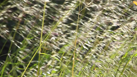 A close up of grasses blowing in the wind Stock Video Footage