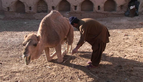 A man and a camel in Iran Stock Video Footage