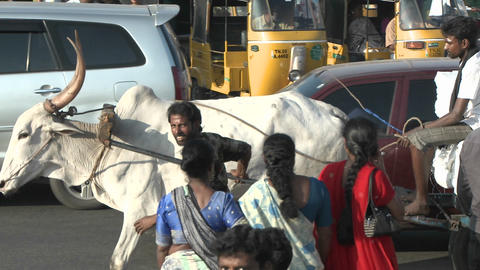 Oxen carry a loaded wagon through a busy Indian street Stock Video Footage