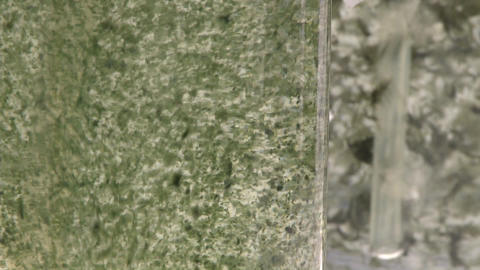 Algae being aired under laboratory lighting conditions.... Stock Video Footage
