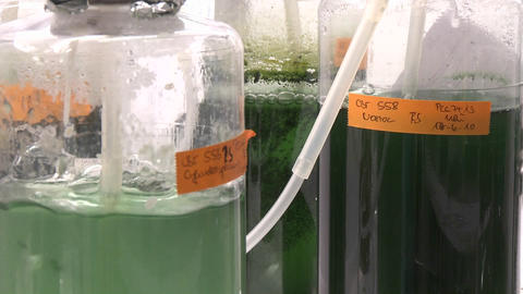 Three flasks containing algae being aired under... Stock Video Footage