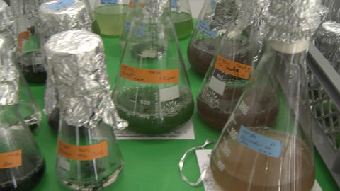 Erlenmeyer flasks with algae are shaken in order to allow... Stock Video Footage
