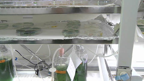 Biofuels. Dolly movement from a petri dish scale photo-bioreactor, different sorts of cyanobacteria Footage
