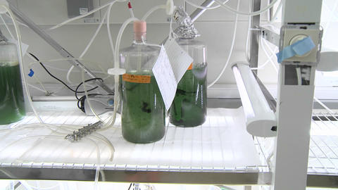 Biofuels. Dolly movement from a petri dish scale... Stock Video Footage