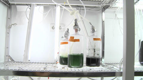 Algae flasks. Dolly movement from a photo-bioreactor we... Stock Video Footage