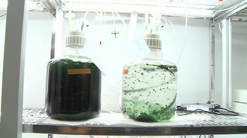 Algae flasks. Dolly movement from a photo-bioreactor we see different sorts of cultures of algae bei Footage