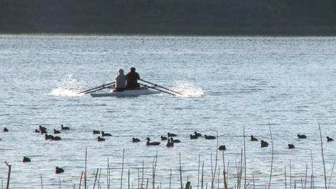 Two people rowing a double scull through a flock of birds... Stock Video Footage