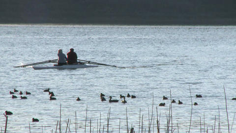 Two people rowing a double scull through a flock of birds on Lake Casitas in Oak View, California Footage