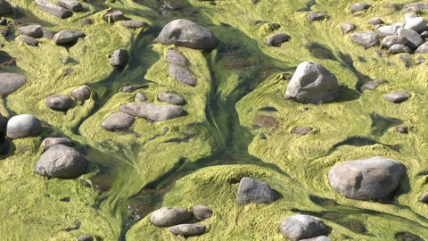 Zoom out of algae growing in the Ventura River near Ojai, California Footage