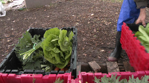 Box of vegetables being closed for a community supported... Stock Video Footage