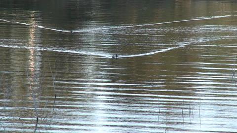 Ducks on Lake Casitas Recreation Area in Oak View,... Stock Video Footage