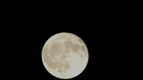 Time lapse of full moon rising through a tree in Oak... Stock Video Footage