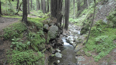 Time lapse of people walking in the forest at Limekiln... Stock Video Footage