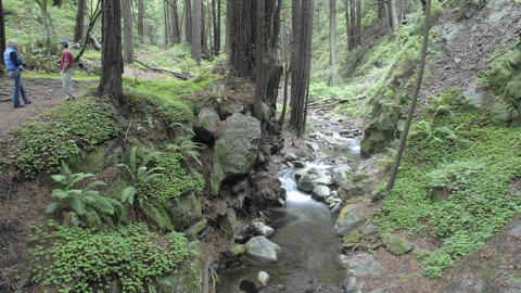 Time lapse of people walking in the forest at Limekiln State Park in Big Sur, California Footage