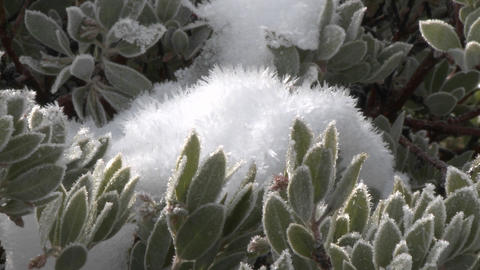 Zoom out on snow and frost on a manzanita tree in Los... Stock Video Footage