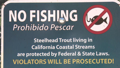 Tilt down on a No Fishing sign for endangered Steelhead... Stock Video Footage