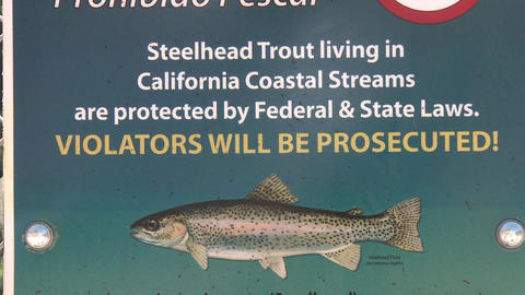 Tilt down on a No Fishing sign for endangered Steelhead Trout on the Ventura River in Ojai, Californ Live Action