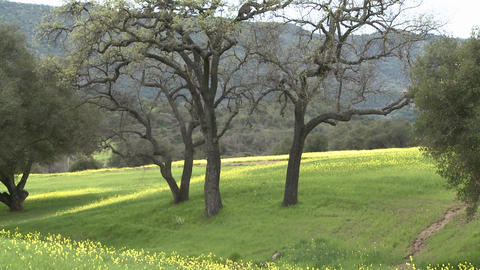Zoom out on green pasture with Valley and Live Oaks during the spring in Ojai, California Footage