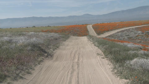 Point of view driving through california poppies in bloom... Stock Video Footage