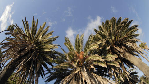 Time lapse of clouds passing over a palm tree on Refugio... Stock Video Footage
