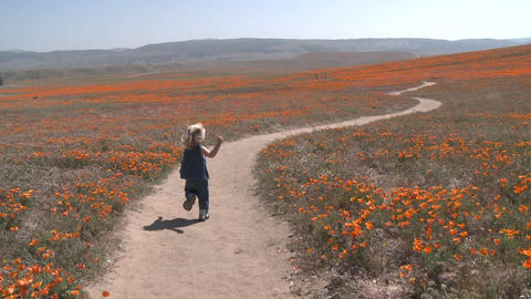 Rear point of view of child running through the california poppies in bloom in the Antelope Valley P Footage