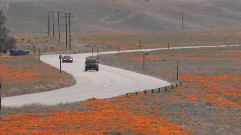 Road through california poppies in bloom entering the... Stock Video Footage