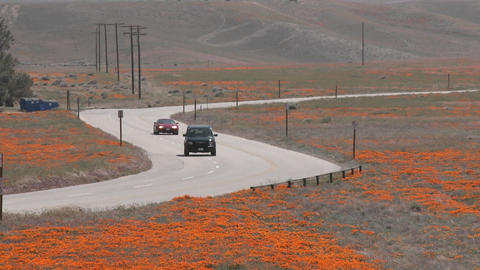 Road through california poppies in bloom entering the Antelope Valley Poppy Preserve, California Footage