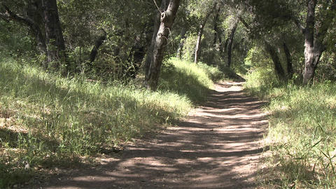 Man trail running in the forest on the Ventura River... Stock Video Footage