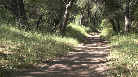 Man trail running in the forest on the Ventura River Preserve in Ojai, California Footage