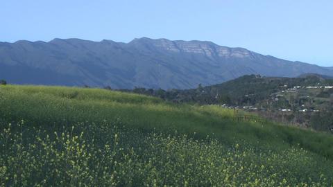 Meadow and the Topa Topa mountain in Ojai, California Stock Video Footage