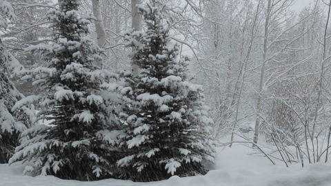 Time lapse of snow falling on a pine tree in Vail, Colorado Stock Video Footage