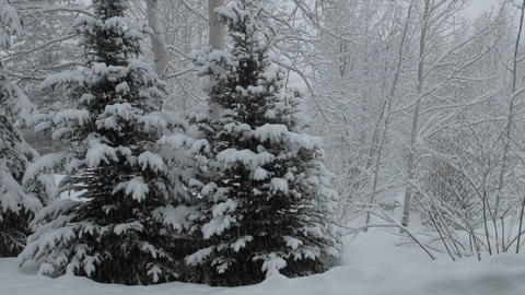 Time lapse of snow falling on a pine tree in Vail, Colorado Footage