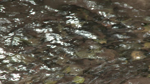 Close up rack focus of water in Wheeler Springs above... Stock Video Footage